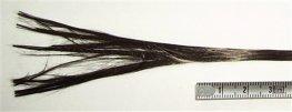 Carbon fiber tow