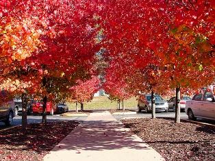 Autumn parking lot